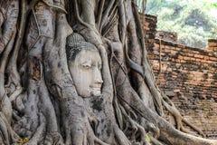 Schließen Sie herauf Kopf von Buddha-Statue in den alten Baumwurzeln Stockfotos