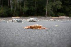 Schließen Sie herauf Krabbe auf Grey Beach Stockbild