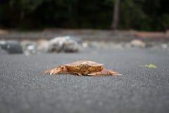 Schließen Sie herauf Krabbe auf Grey Beach Stockfotos
