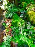 Schließen Sie herauf Landschaft, die Straßenabdeckung mit kleinen Anlagen, und Moos auf Stein im Feuchtigkeitswald in der natürli Stockfotos