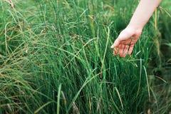 Schließen Sie herauf Mädchen ` s Hand, die Gras hält lizenzfreie stockfotos