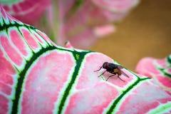 Schließen Sie herauf Makro einer Fliege auf einem bunten Blatt Stockbild