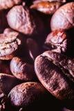 Schließen Sie herauf Makro von Arabica coffe Bohne Stockfotografie