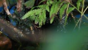 Schließen Sie herauf Moos und Farn im nass Sumpf in der Natur Schöne grüne Umwelt stock video footage
