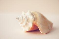 Schließen Sie herauf Muschel auf rosa Hintergrund Lizenzfreie Abbildung