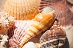 Schließen Sie herauf Muscheln im Sand Stockfoto