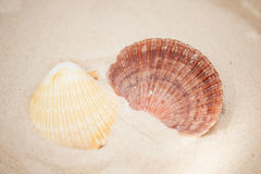 Schließen Sie herauf Muscheln im Sand Lizenzfreies Stockbild