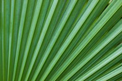 Schließen Sie herauf Musterlinie und Beschaffenheit von Palmblättern lizenzfreie stockbilder
