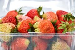 Schließen Sie herauf nahe reife rote Erdbeere im Plastiktransparenzsatz, auf weißem Hintergrund lizenzfreie stockfotos