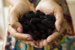 Schließen Sie herauf neue schwarze Maulbeerenan hand Anmerkung: Flache Tiefe von fie Lizenzfreie Stockfotos