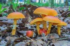Schließen Sie herauf Pilz Stockfotos