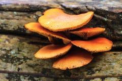 Schließen Sie herauf Pilz im tiefen Wald Lizenzfreies Stockfoto
