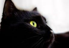 Schließen Sie herauf Porträt der schwarzen Katze Lizenzfreie Stockbilder