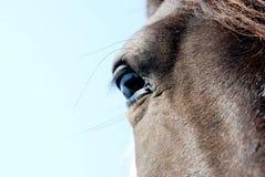 Schließen Sie herauf Porträt von Brown-Pferd Stockfoto