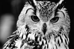 Schließen Sie herauf Portrait der eurasischen Adler-Eule Stockbilder