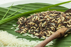 Schließen Sie herauf Reis Lizenzfreies Stockbild