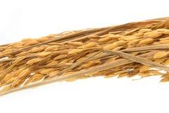 Reiskorn auf weißem Hintergrund Stockfotos