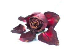 Schließen Sie herauf rote Rose Stockbilder