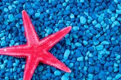 Schließen Sie herauf rote Starfish auf blauem Hintergrund Stockfotos