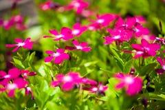 Schließen Sie herauf schöne Blume Lizenzfreie Stockfotos