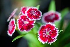 Schließen Sie herauf schöne Blume Lizenzfreie Stockbilder