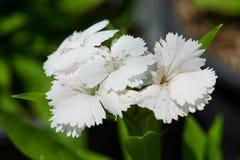 Schließen Sie herauf schöne Blume Stockfotografie