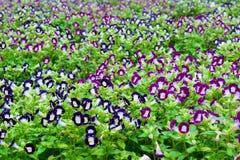 Schließen Sie herauf schöne Blume Lizenzfreies Stockfoto