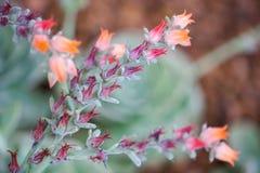Schließen Sie herauf schöne Blume Stockfotos