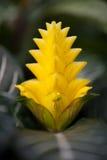 Schließen Sie herauf schöne Blume Stockbild