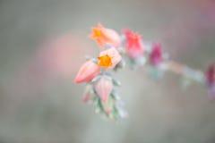 Schließen Sie herauf schöne Blume Lizenzfreies Stockbild
