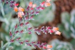 Schließen Sie herauf schöne Blume Lizenzfreie Stockfotografie