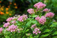 Schließen Sie herauf schöne Blume Stockbilder