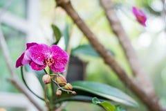 Schließen Sie herauf schöne weiße Naturorchideenblume lizenzfreie stockbilder