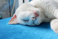 Schließen Sie herauf Schlaf oder sterben Sie Katze auf Sofa Stockfotografie