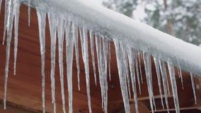 Schließen Sie herauf Schuss der langen Eiszapfen, die am Dach eines Holzhauses irgendwo im Winterwald hängen stock video footage