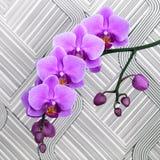 Schließen Sie herauf Schuss der rosa Orchideenblume Stockfoto