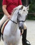 Schließen Sie herauf Schuss des Reiters auf einem ihrem Dressurreitenpferd Stockfotografie