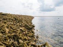 Schließen Sie herauf Schuss von den toten korallenroten Fragmenten, die auf einem Strand auf dem Re liegen lizenzfreie stockfotografie