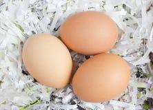 Schließen Sie herauf Schuss von drei Eiern. Lizenzfreies Stockbild