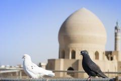 Schließen Sie herauf Schuss von 2 Tauben auf Dachspitzen des traditionellen iranischen Wohnhauses in Kashan, der Iran Stockbild