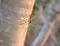 Schließen Sie herauf Spinne im Netz stockfotos