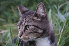Schließen Sie herauf Tabby Cat stockfotos