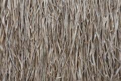 Schließen Sie herauf trockenes mit Stroh gedeckt für Hausdach Lizenzfreies Stockbild