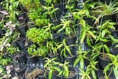 Schließen Sie herauf viele Grünpflanze des vertikalen Bauernhofes Lizenzfreies Stockbild