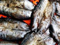 Schließen Sie herauf viele Makrele und saba Fische auf rotem Plastiknetz am Straßenlebensmittelmarkt Lizenzfreie Stockbilder