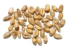 Schließen Sie herauf Weizen Lizenzfreie Stockfotos