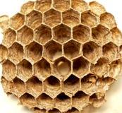 Schließen Sie herauf wilde Bienenwabe stockbild