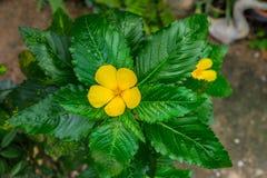 Schließen Sie herauf Yeloow-Blume Stockfotos