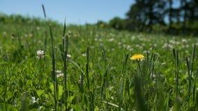 Schließen Sie herauf Zeitlupewaldwiese an einem sonnigen Tag stock video footage