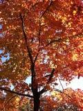 Schließen Sie oben auf Baum im Fall stockbild